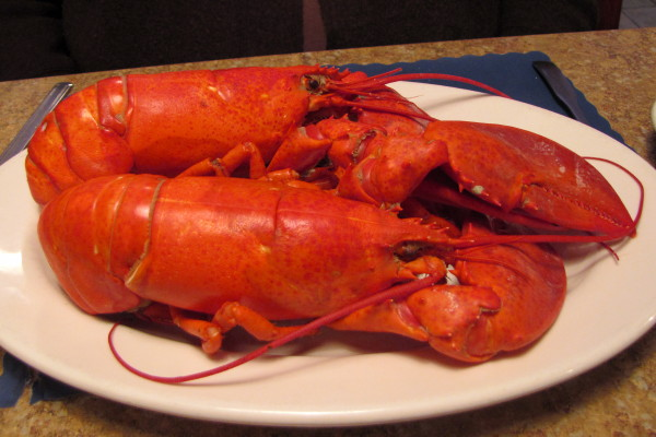 photo of twin boiled lobsters from Haddad's Ocean Cafe, Marshfield, MA
