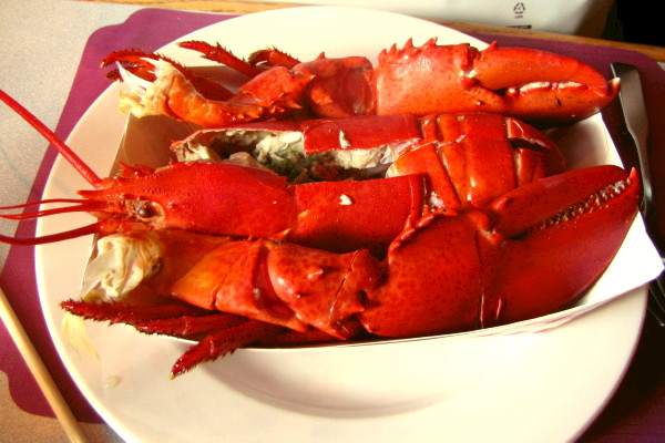 photo of lobster from Ogunquit Lobster Pound, Ogunquit, ME
